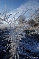 freeze_24