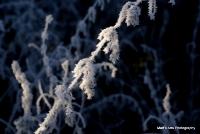 freeze_7