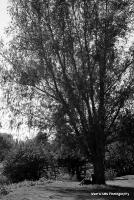 meadows_10