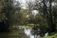 meadows_9