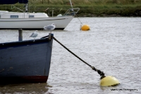 Orford 2012