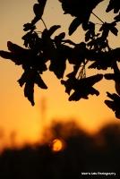 sunrise_30