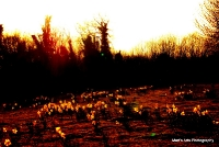 sunsets_30