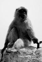 monkey_10