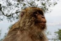 monkey_14