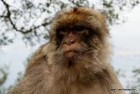 monkey_16