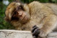 monkey_17