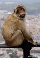 monkey_19