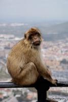 monkey_20