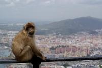 monkey_21