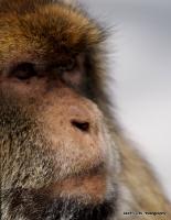 monkey_22