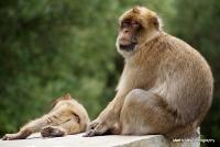 monkey_23