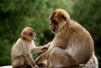 monkey_24