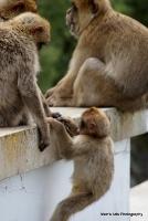 monkey_25