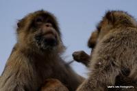 monkey_26