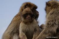 monkey_27