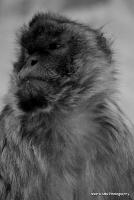 monkey_29