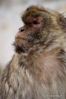 monkey_30
