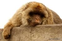 monkey_6