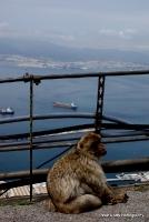 monkey_8
