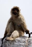 monkey_9