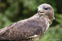 buzzards_13