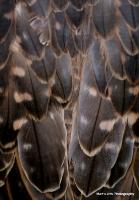 falcons_10
