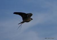 falcons_11