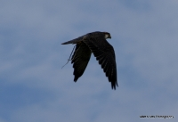 falcons_12