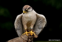 falcons_13