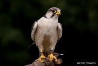 falcons_14