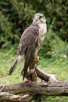 falcons_16