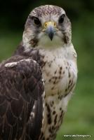 falcons_17