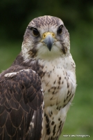 falcons_18
