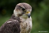 falcons_19