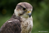 falcons_20
