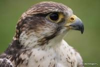 falcons_21