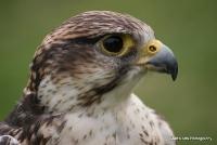 falcons_22