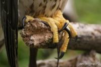 falcons_23