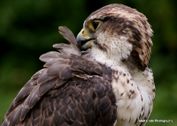falcons_25