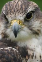 falcons_27