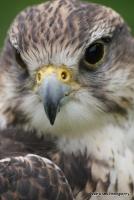falcons_28