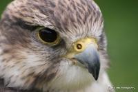 falcons_29