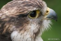 falcons_30
