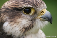 falcons_31
