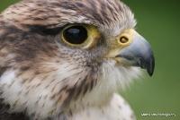 falcons_32