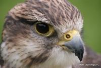 falcons_34
