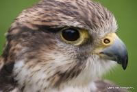 falcons_35