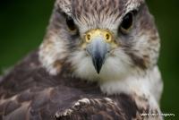 falcons_36