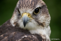 falcons_37